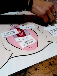 poster anatomia vulva violetab
