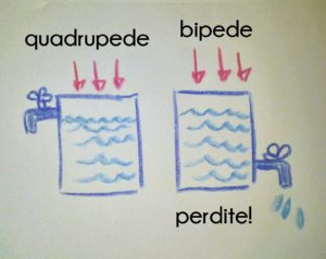 differenze-quadrupedi-bipedi