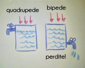 differenze-quadrupedi-bipedi